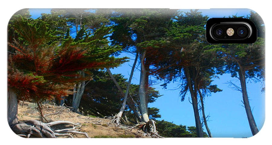 San Francisco IPhone X Case featuring the photograph Twisted Cypress by Sally Bauer