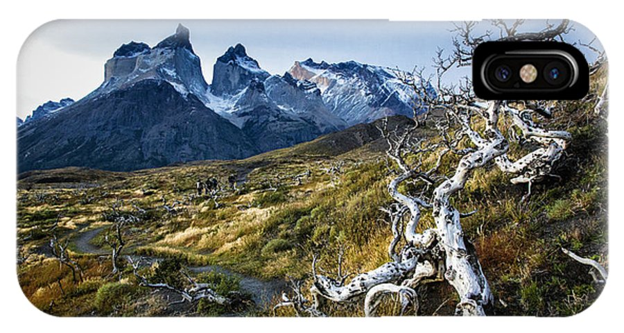 Patagonia IPhone X Case featuring the photograph Twisted Tree And Trail by Timothy Hacker