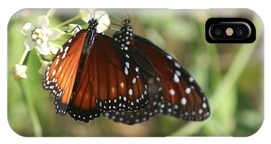 Butterfly IPhone X Case featuring the photograph Two Butterflies by Christiane Schulze Art And Photography
