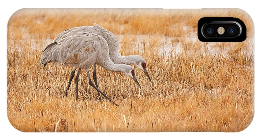 Cranes IPhone X Case featuring the photograph Two Cranes In The Field by Ruth Jolly