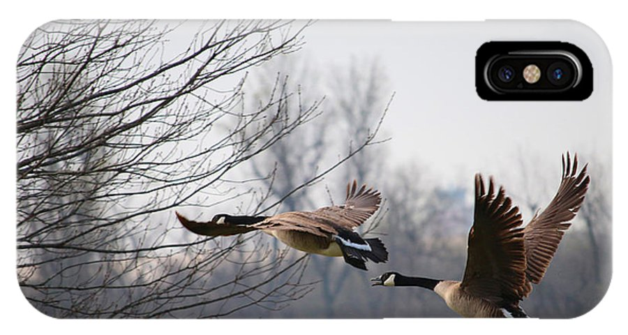Tags: Great Blue Heron Photographs IPhone X Case featuring the photograph Two Geese In Flight by Vernis Maxwell