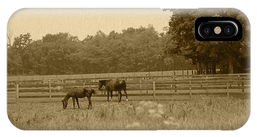 Two Horses IPhone X Case featuring the photograph Two Horses by Minnie Davis