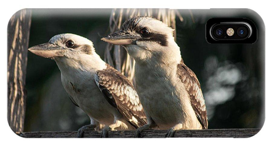 Kookaburra IPhone X Case featuring the photograph two Kookaburra by Michael Podesta