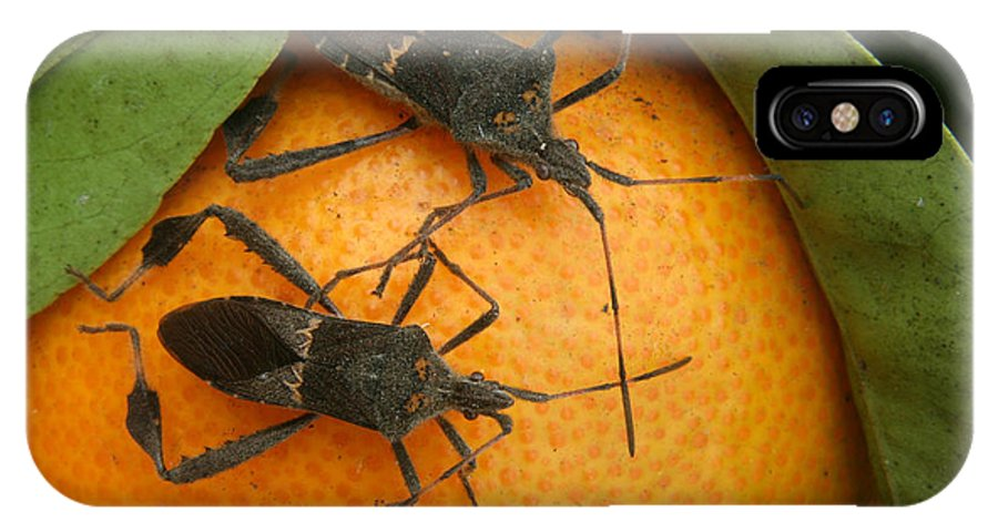 Leaf Footed Bug IPhone X / XS Case featuring the photograph Two Leaf Footed Bugs On An Orange by Robert Hamm