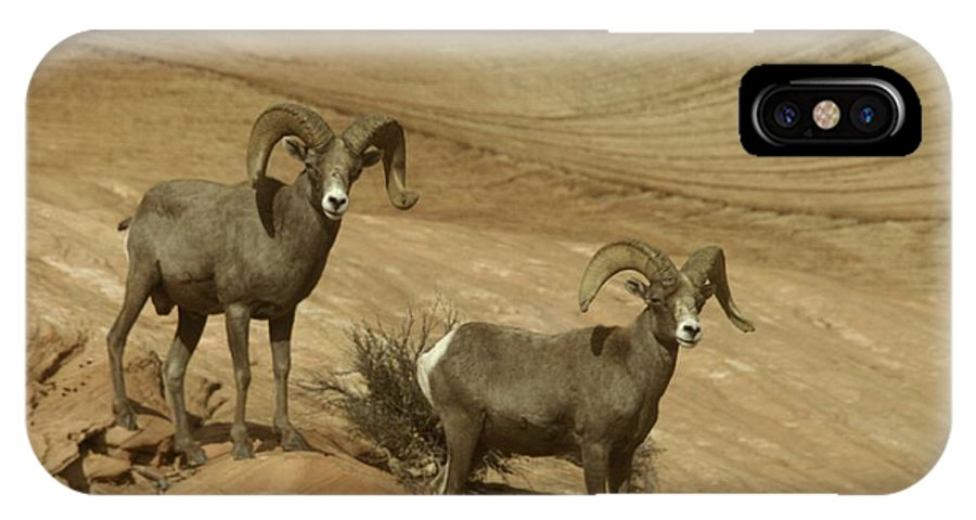 Horns IPhone X Case featuring the photograph Two Male Rams At Zion by Jeff Swan