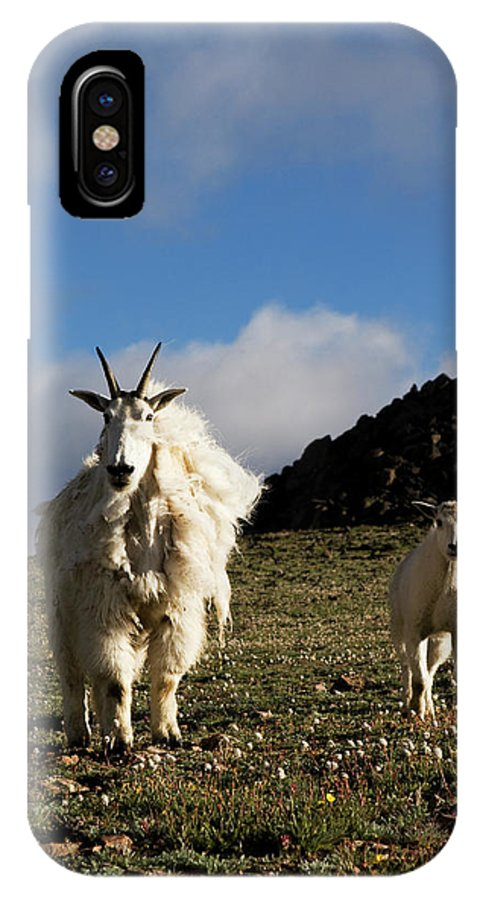 Animal Kingdom IPhone X Case featuring the photograph Two Mountain Goats Oreamnos Americanus by Scott Dickerson