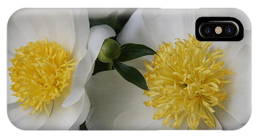 White Peony IPhone X Case featuring the photograph Two Sisters by Christiane Schulze Art And Photography