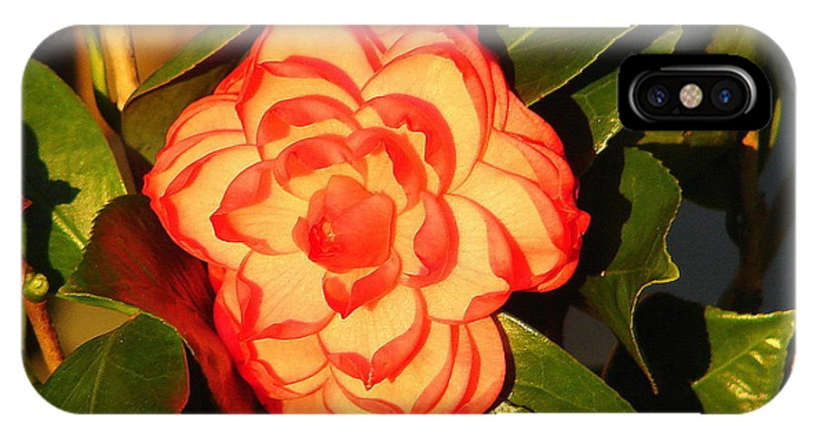 Bok Tower IPhone X Case featuring the photograph Two-tone Camellia by Lew Davis