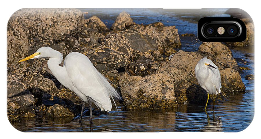 White IPhone X Case featuring the photograph Two White Herons And A Coot by Kathleen Bishop