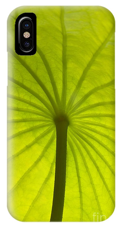 Leaf IPhone X Case featuring the photograph Under The Leaf by Marco Destefanis
