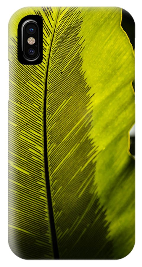 Leaf IPhone X Case featuring the photograph Underside by Kevin Buffington