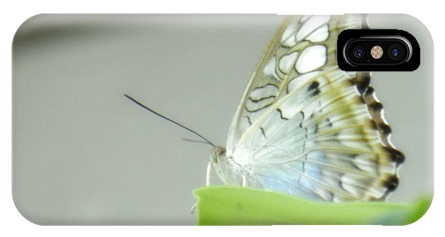 Beauty IPhone X Case featuring the photograph Unique Looking Butterfly by Latisha Wolf