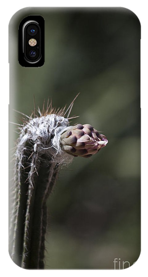 Cacti IPhone X Case featuring the photograph Unraveling by Douglas Barnard