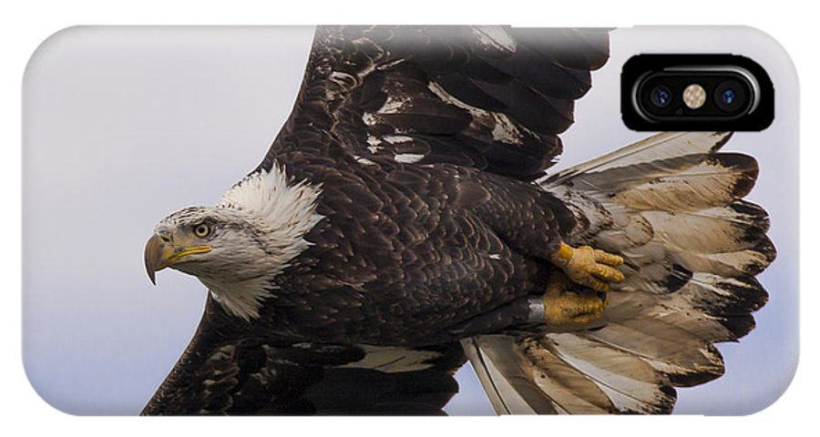 Bald Eagle IPhone X / XS Case featuring the photograph Up Close And Personal by Ursula Lawrence