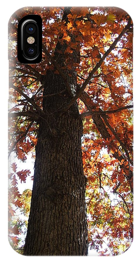 Tree IPhone X Case featuring the photograph Up Fall by Minding My Visions by Adri and Ray