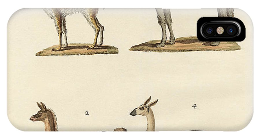 Dromedary IPhone X Case featuring the drawing Various Camels by Splendid Art Prints