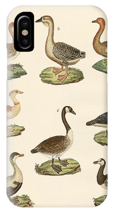 Wild Goose IPhone X Case featuring the drawing Various Kinds Of Geese by Splendid Art Prints