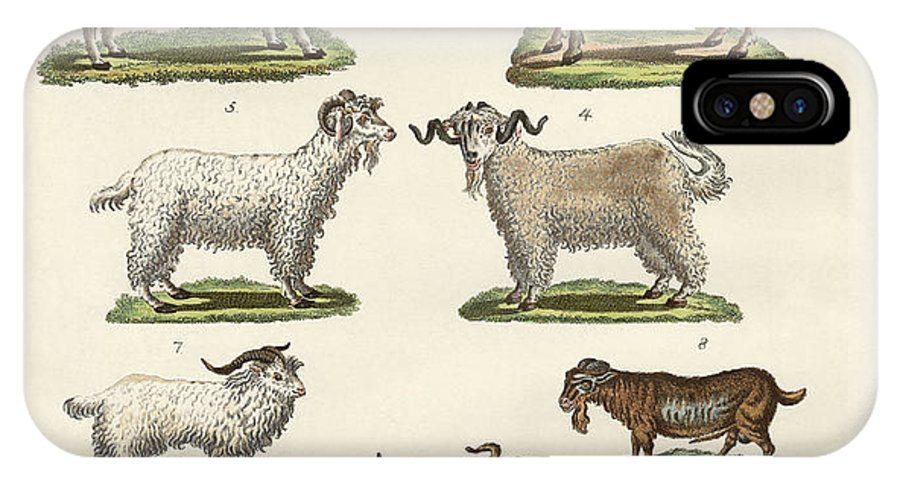 Ibex IPhone X Case featuring the drawing Various Kinds Of Goats And Bucks by Splendid Art Prints