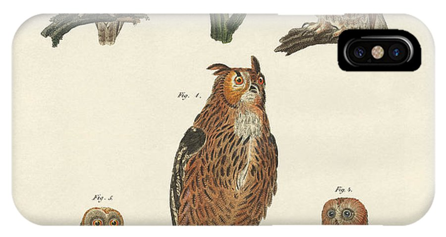 Eagle Owl IPhone X Case featuring the drawing Various Kinds Of Owls by Splendid Art Prints