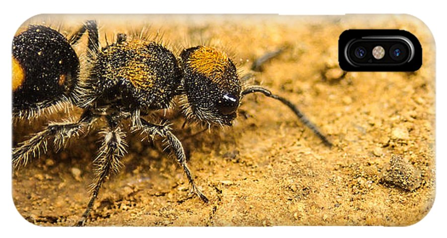 Wasp IPhone X / XS Case featuring the photograph Velvet Ant by Tyler Lucas
