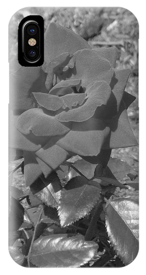 Rose IPhone X Case featuring the photograph Velvet Rose by Pharris Art