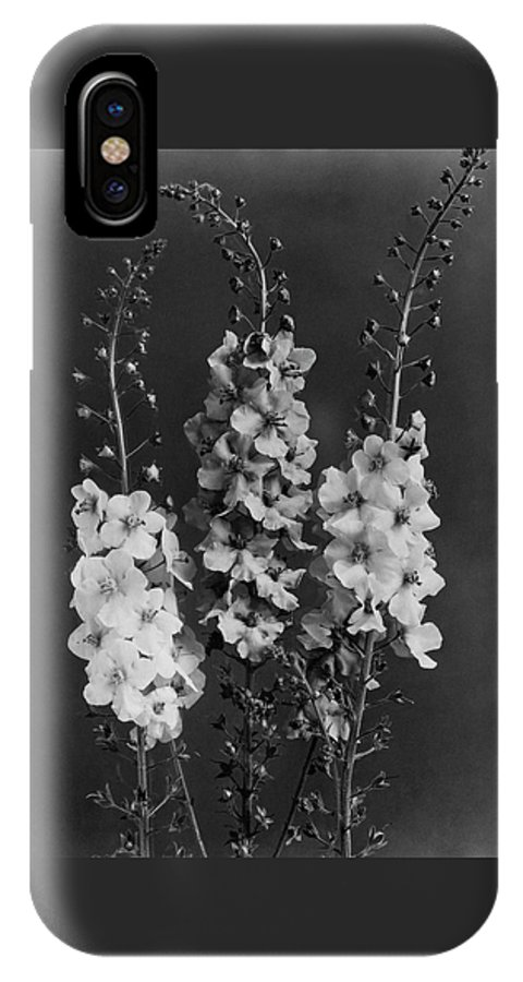 Garden IPhone X Case featuring the photograph Verbascum Phoeniceum Flowers by J. Horace McFarland