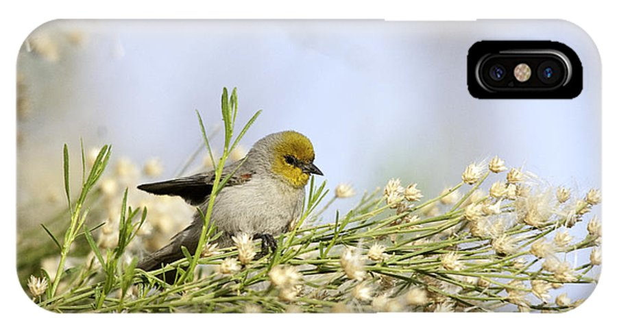 Bird IPhone X Case featuring the photograph Verdin Winging It by Barbara Amato