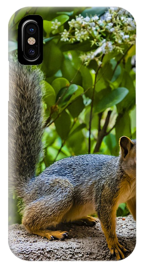 Squirrel IPhone X Case featuring the photograph Very Interesting by Dennis Reagan