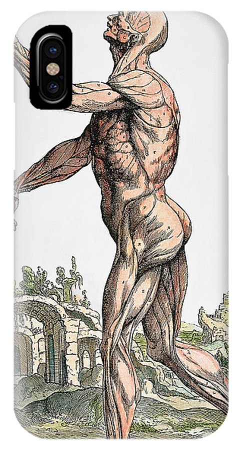 1543 IPhone X Case featuring the photograph Vesalius: Muscles 02, 1543 by Granger