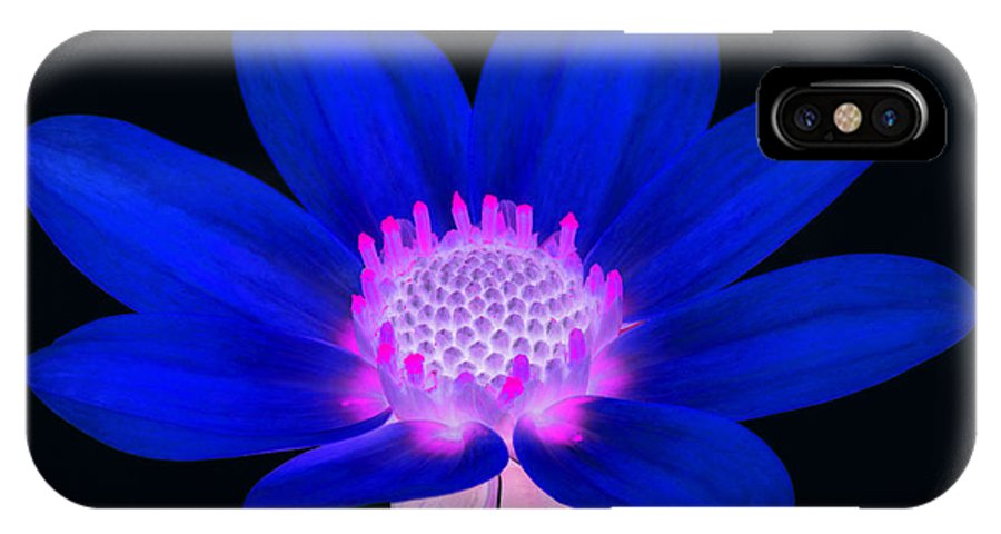 Dahlia IPhone X Case featuring the photograph Vibrant Blue Single Dahlia With Pink Centre On Black. by Rosemary Calvert