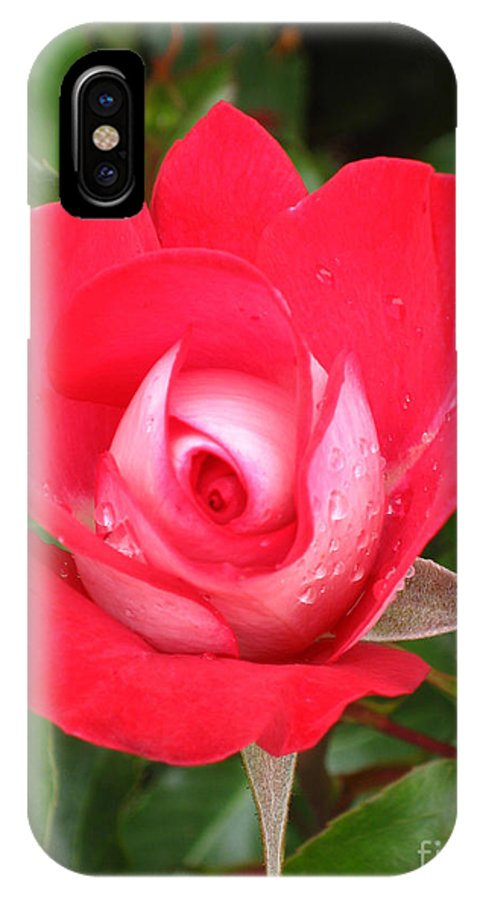 Flowers IPhone X Case featuring the photograph Vibrant Red Rose by Steven Baier