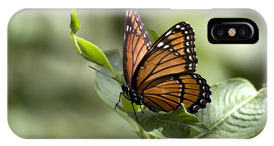 Viceroy IPhone X Case featuring the photograph Viceroy Butterfly by Meg Rousher
