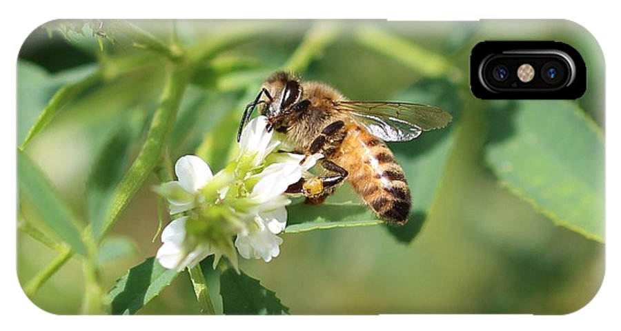 Honeybee IPhone X Case featuring the photograph View From Below by Lucinda VanVleck