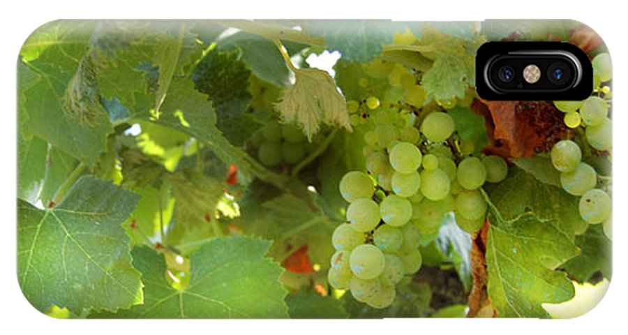 Vineyard IPhone X Case featuring the photograph Vineyard by Gina Dsgn