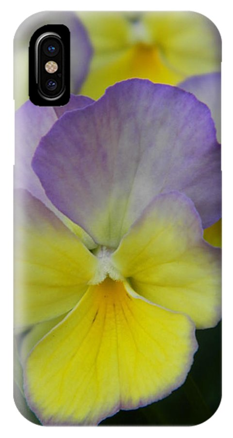Viola IPhone X Case featuring the photograph Viola Beauty by Nicki Bennett