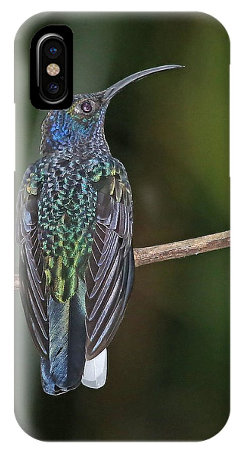 Nature IPhone X Case featuring the photograph Violet Saberwing by Mike Dickie
