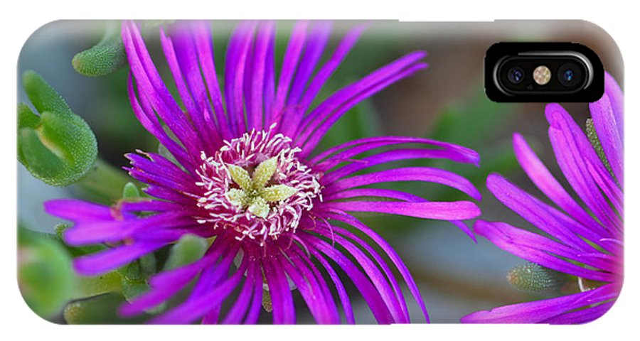 IPhone X Case featuring the photograph Violet Spring Iv by Ricky Cerda