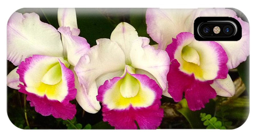 Phalaenopsis IPhone X Case featuring the photograph Cattleya Orchid by Richard Bryce and Family