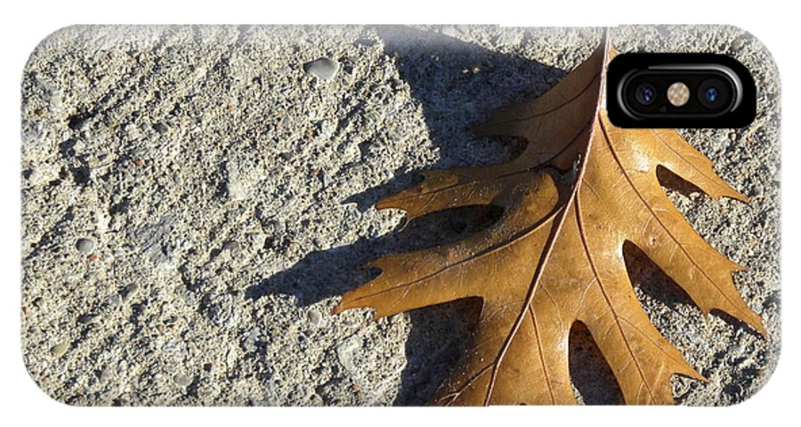 Oak Leaf On Sidewalk IPhone X / XS Case featuring the photograph Wait by Laura Yamada