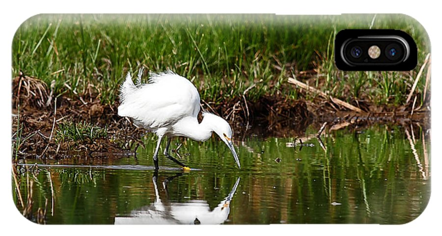 Birds IPhone X Case featuring the photograph Waiting For Lunch by John Kulberg