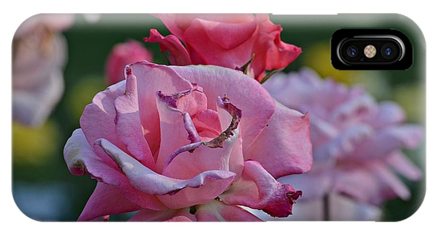 Pink IPhone X Case featuring the photograph Walking Through The Rose Garden by Todd Schworm