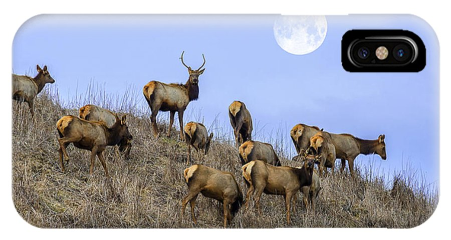 Elk IPhone X Case featuring the photograph Wanderers by Anthony Heflin