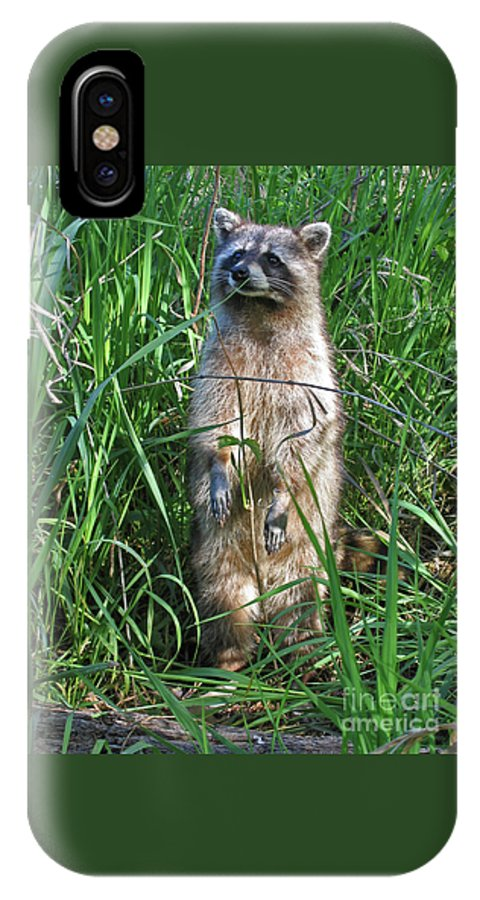 Raccoon IPhone X Case featuring the photograph Wary by Ann Horn
