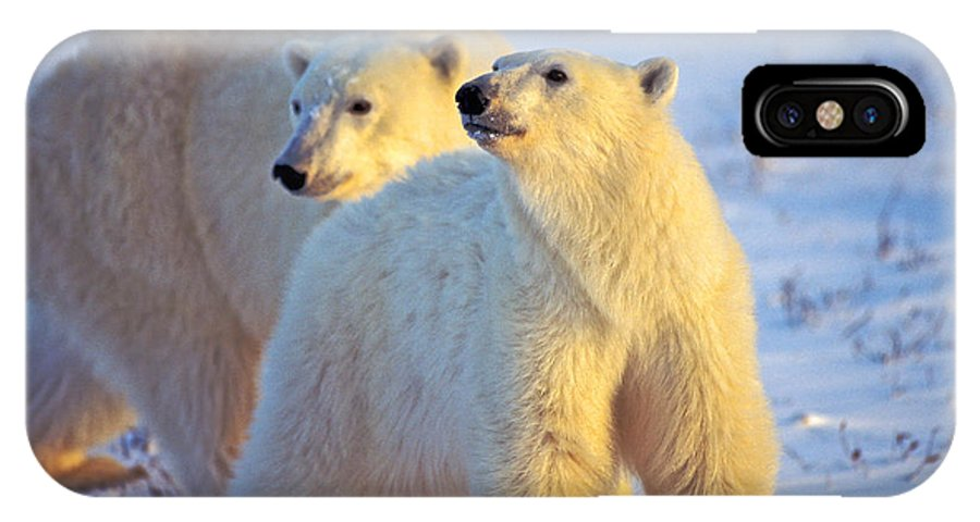 Arctic IPhone X / XS Case featuring the photograph Wary Polar Bears by Randy Green
