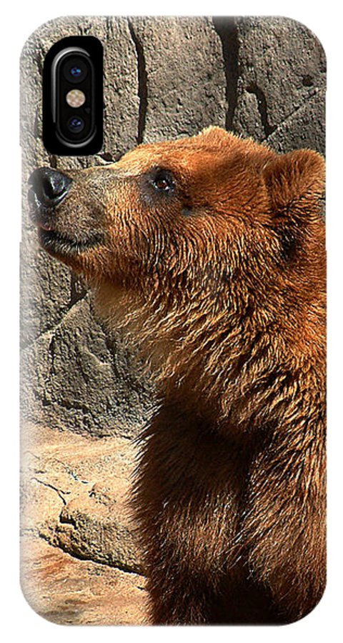 Bear IPhone X Case featuring the photograph Watching The Sun Set by RC DeWinter