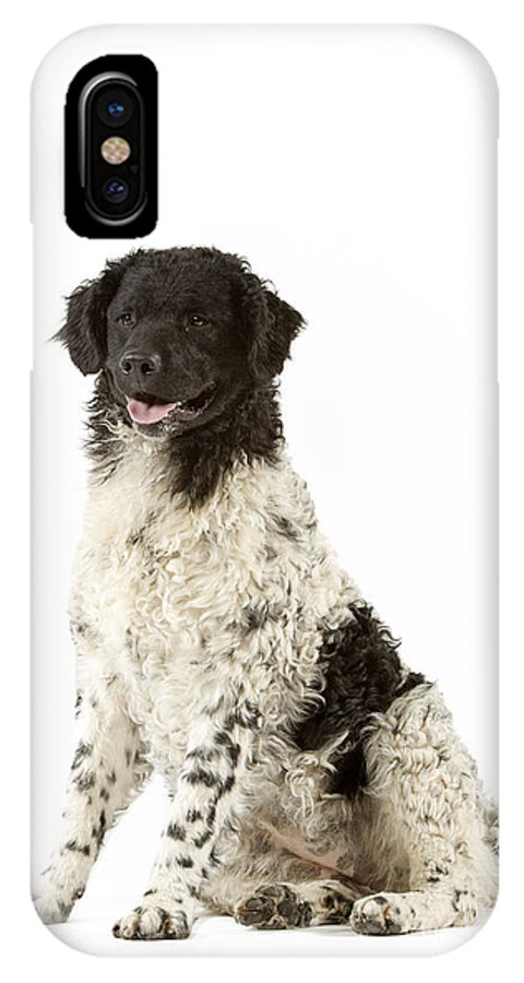 Water Dog IPhone X / XS Case featuring the photograph Water Dog by Jean-Michel Labat