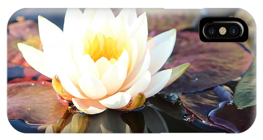 Water IPhone X Case featuring the photograph Water Lilly by Yani DeSousa