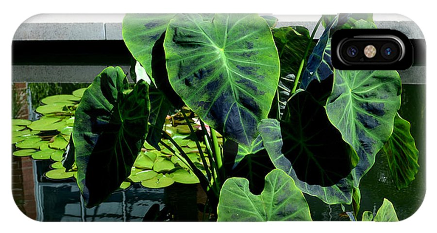 Pamela Briggs Luther IPhone X Case featuring the photograph Water Plants by Luther Fine Art