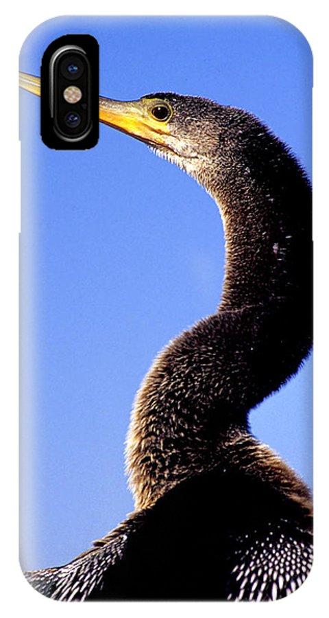 Anhinga IPhone X Case featuring the photograph Water Turkey Anhinga Animal Portrait by A Gurmankin