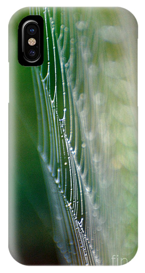 Spider IPhone X Case featuring the photograph Web by Francine Hall